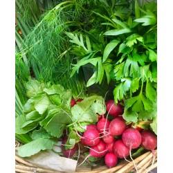 Koszyk warzyw z naszego ogrodu