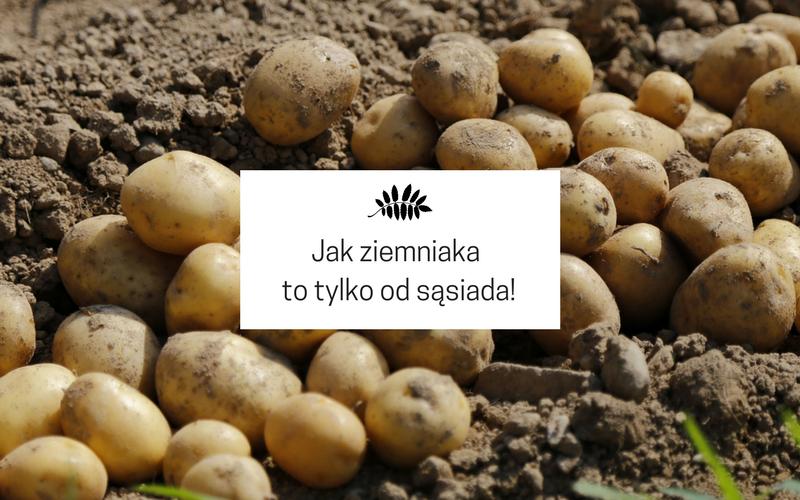 Ziemniaki od sąsiada